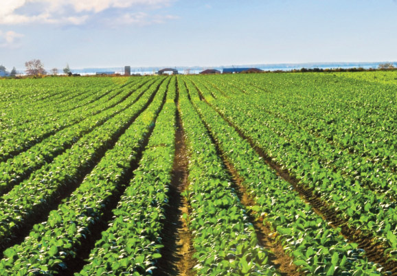 The Business and Technology of Agriculture