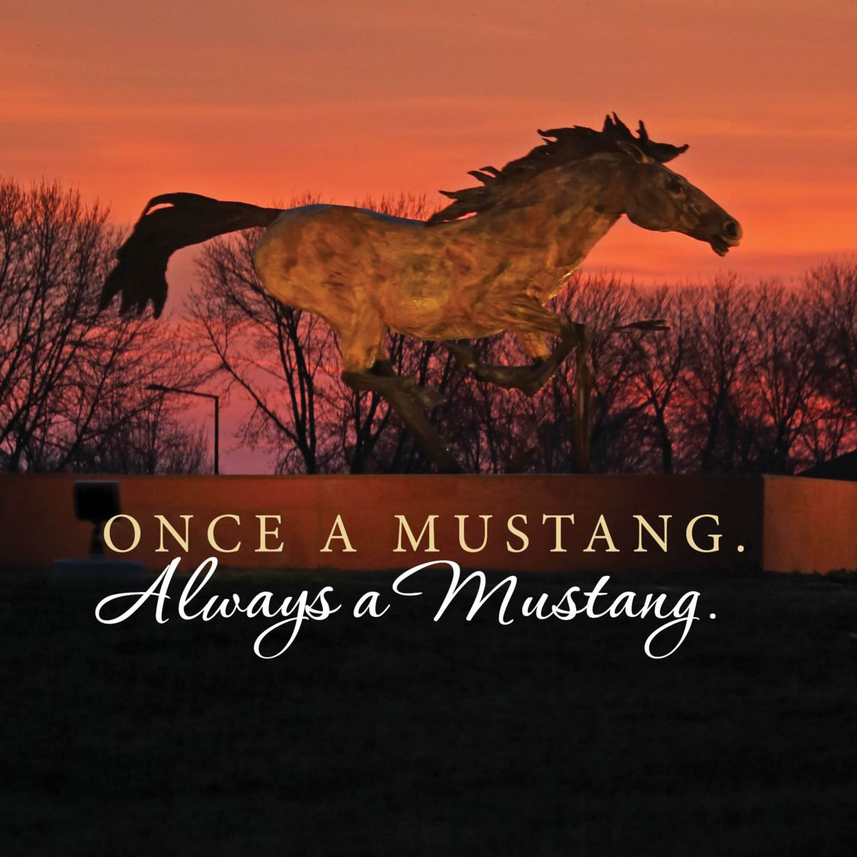 Once a Mustang Square Image